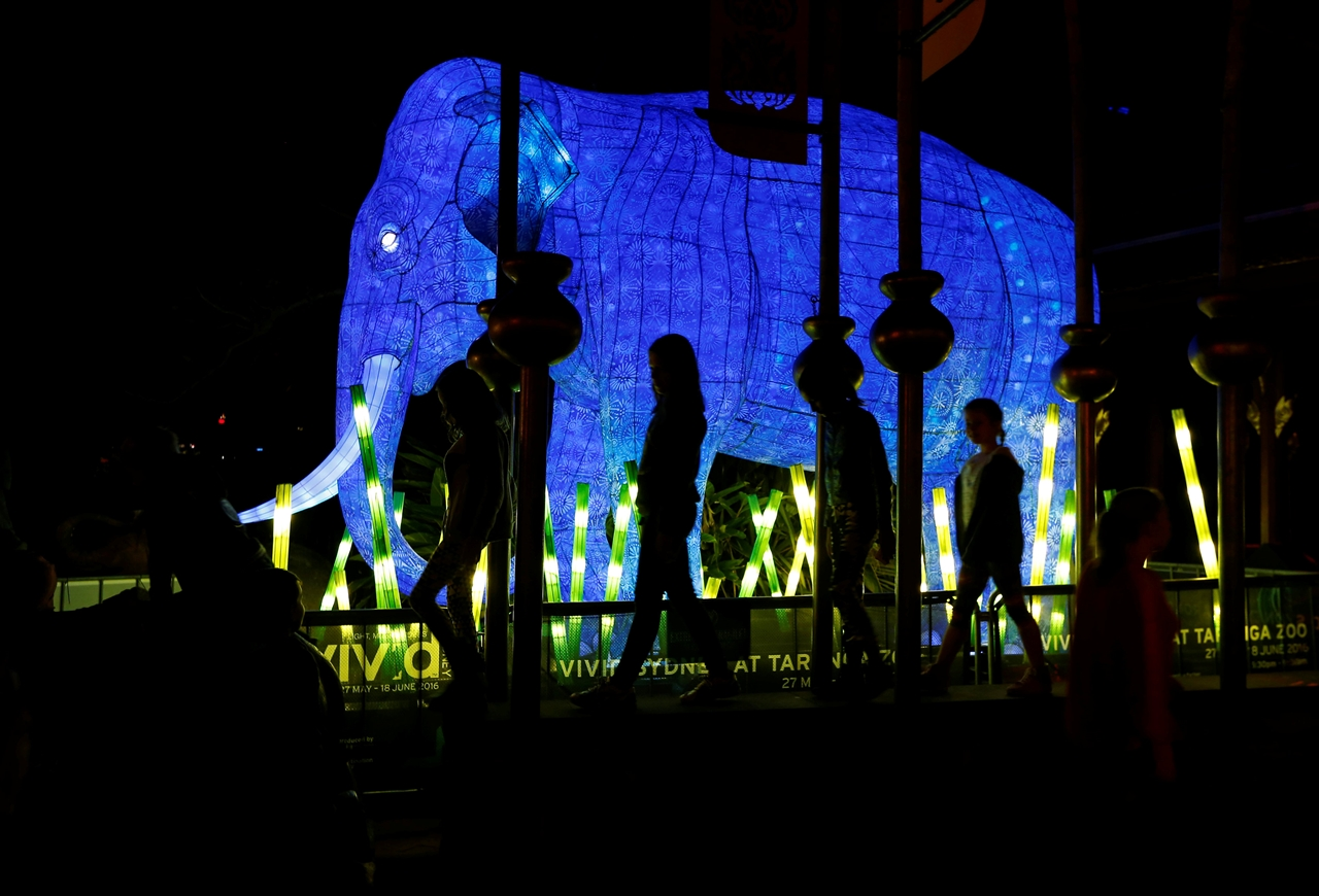 Festival of light sculptures in Sydney 06