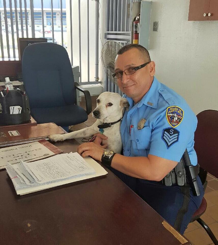 In Puerto Rico homeless dog found a job in a police station 04