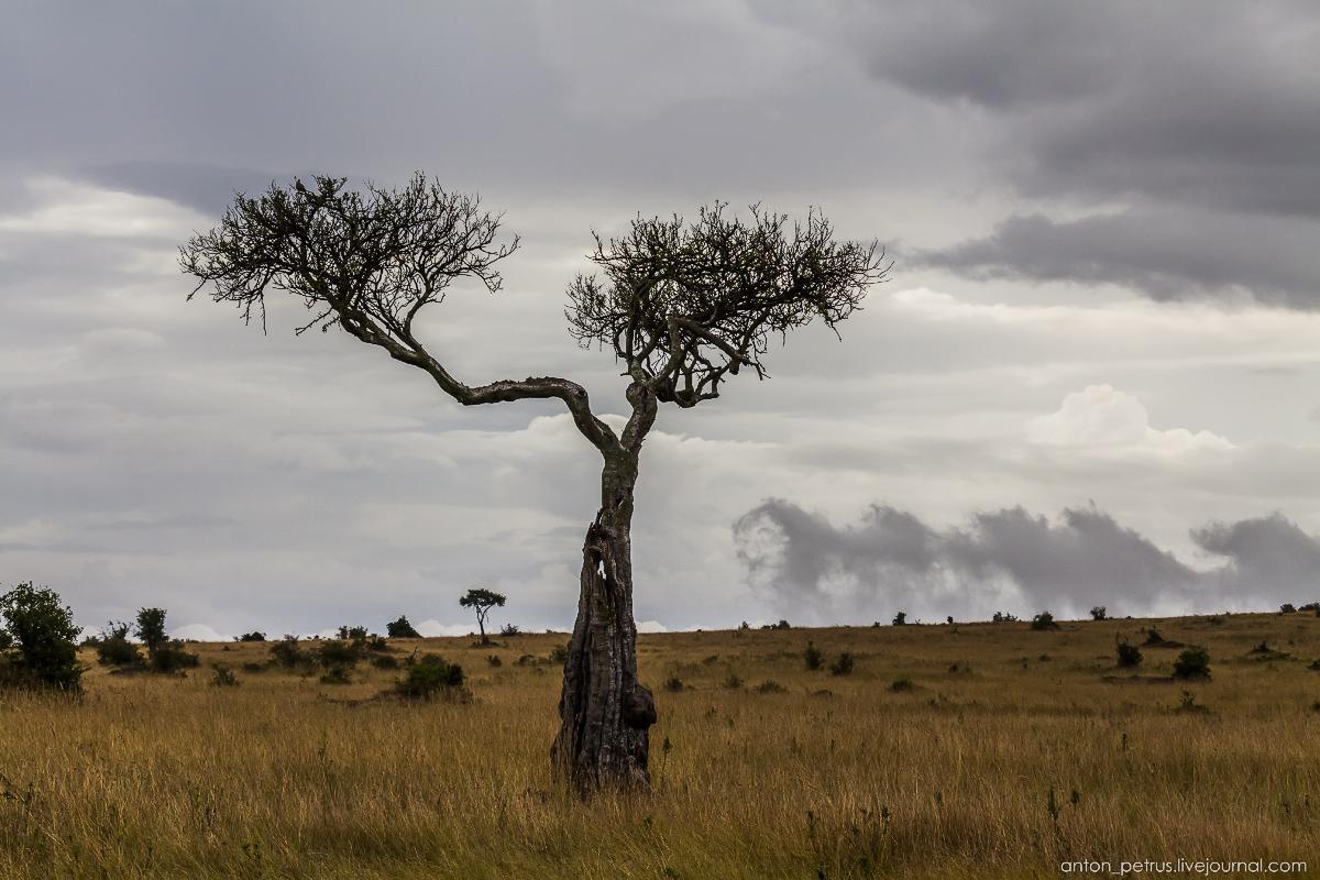 Jambo, mzungu 12