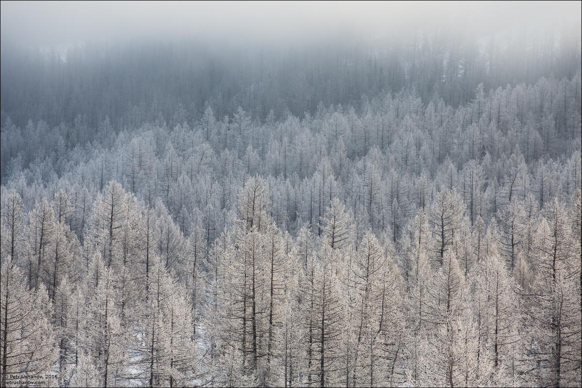 Polar Urals - a trip to the Nenets 10