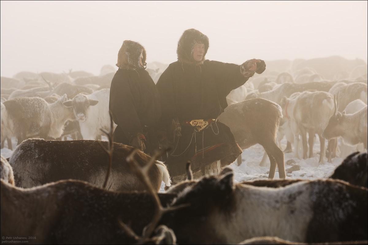 Polar Urals - a trip to the Nenets 11