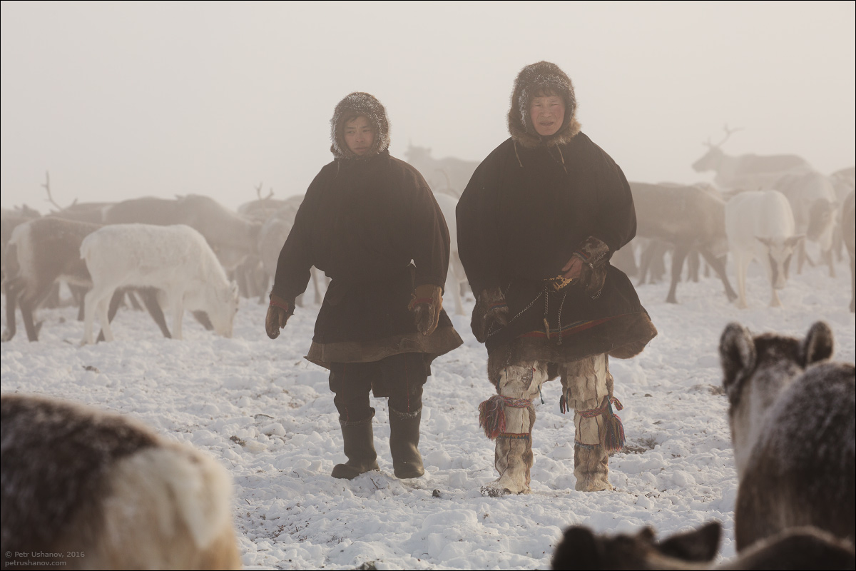Polar Urals - a trip to the Nenets 12