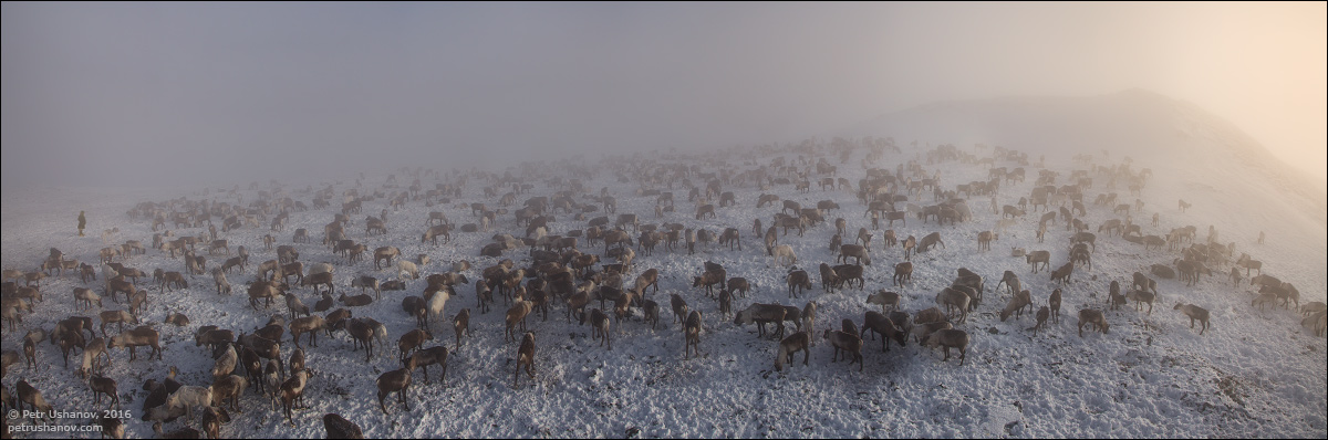 Polar Urals - a trip to the Nenets 13