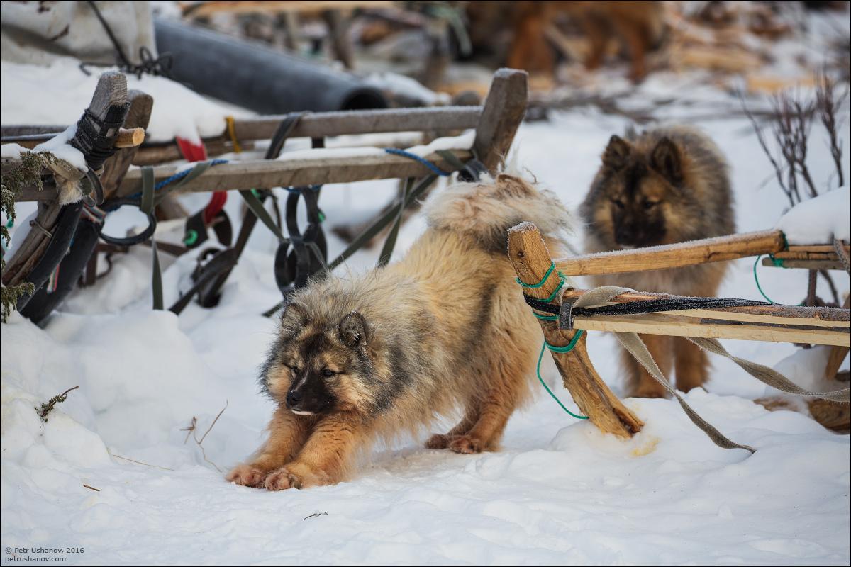Polar Urals - a trip to the Nenets 17