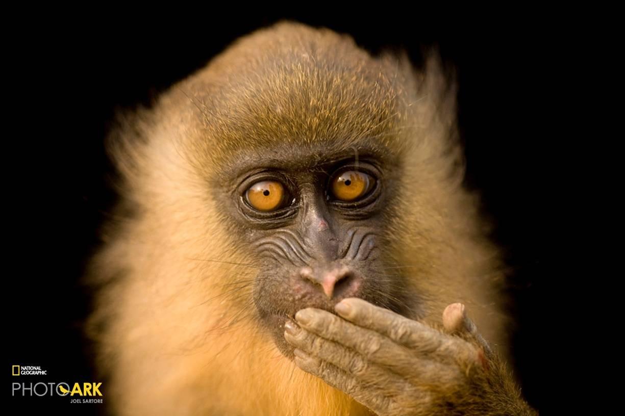Редкие приматы