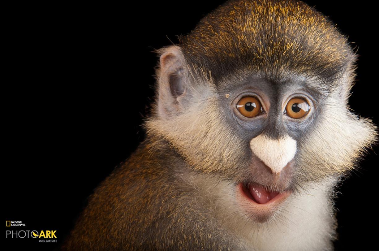 Rare primates 02