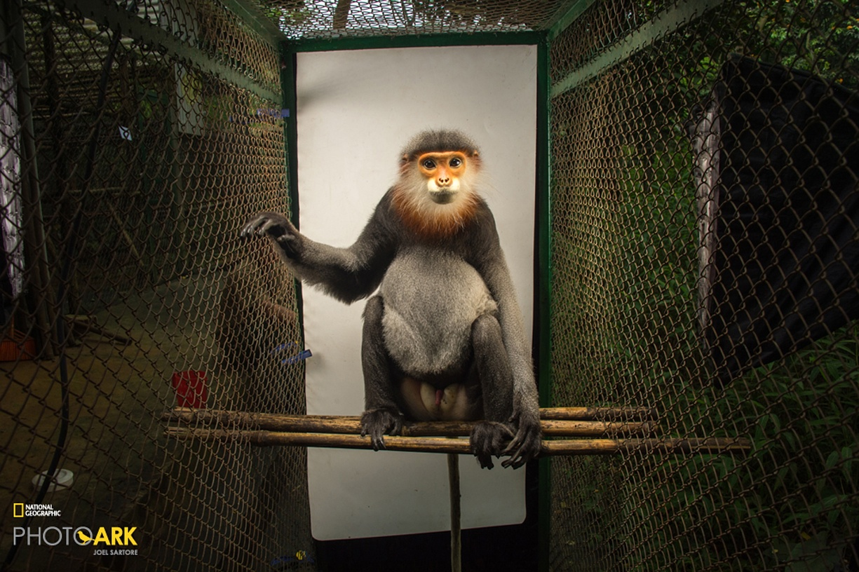 Rare primates 03