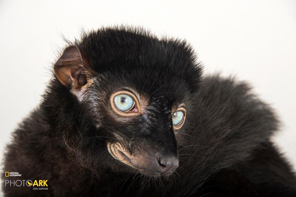 Rare primates 04