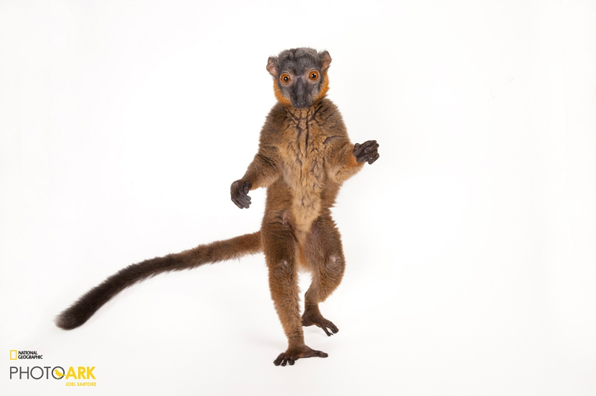 Rare primates 05
