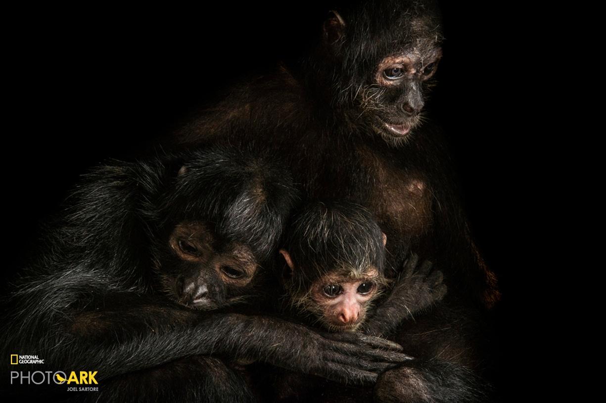 Rare primates 07