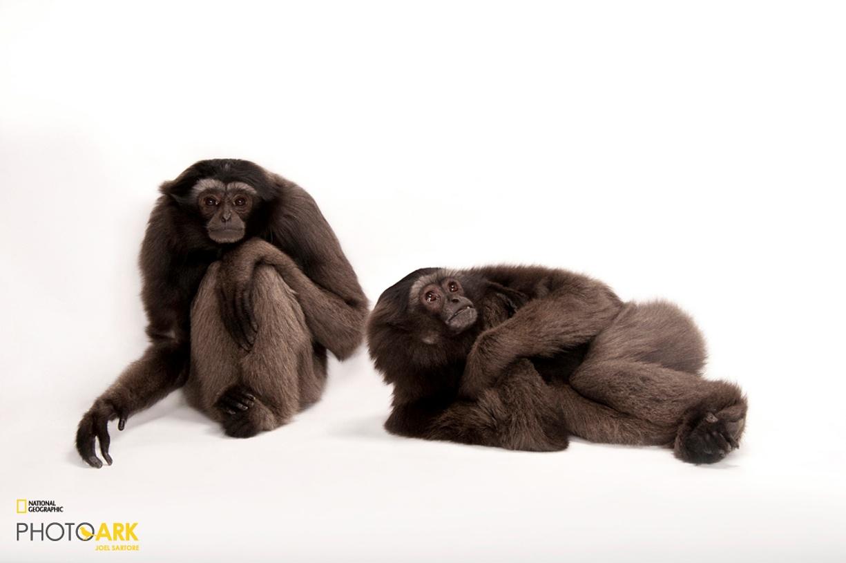 Rare primates 08