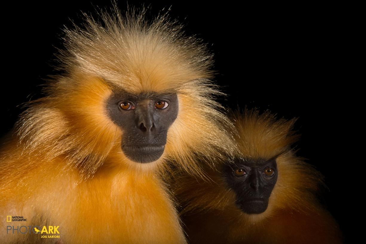 Rare primates 09