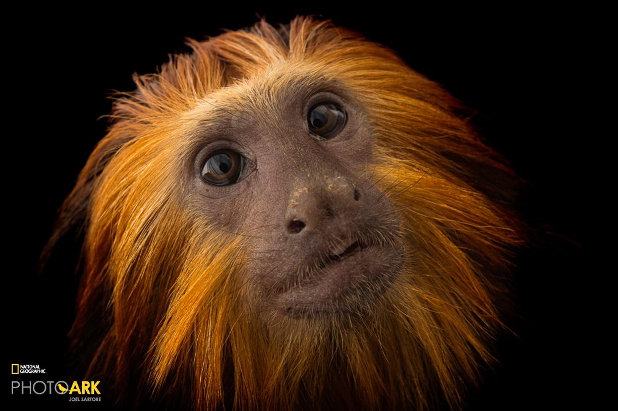 Rare primates 10