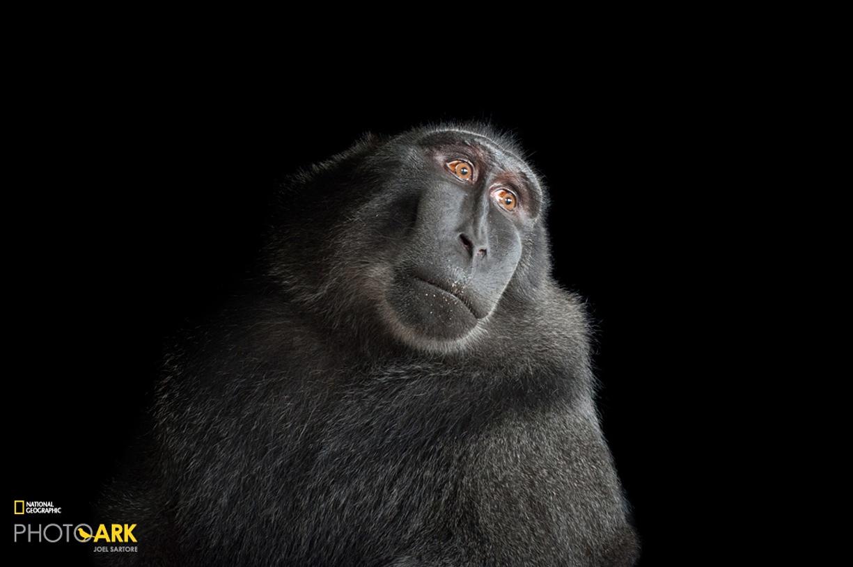 Rare primates 11