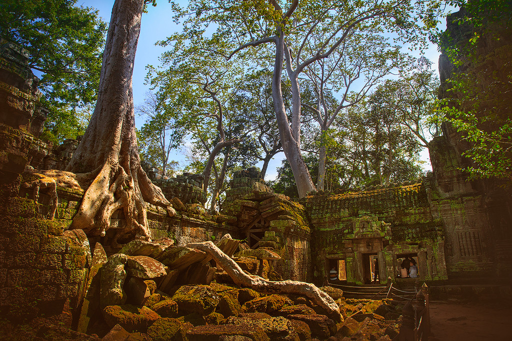 The Angkor Wat. City in the jungle 15