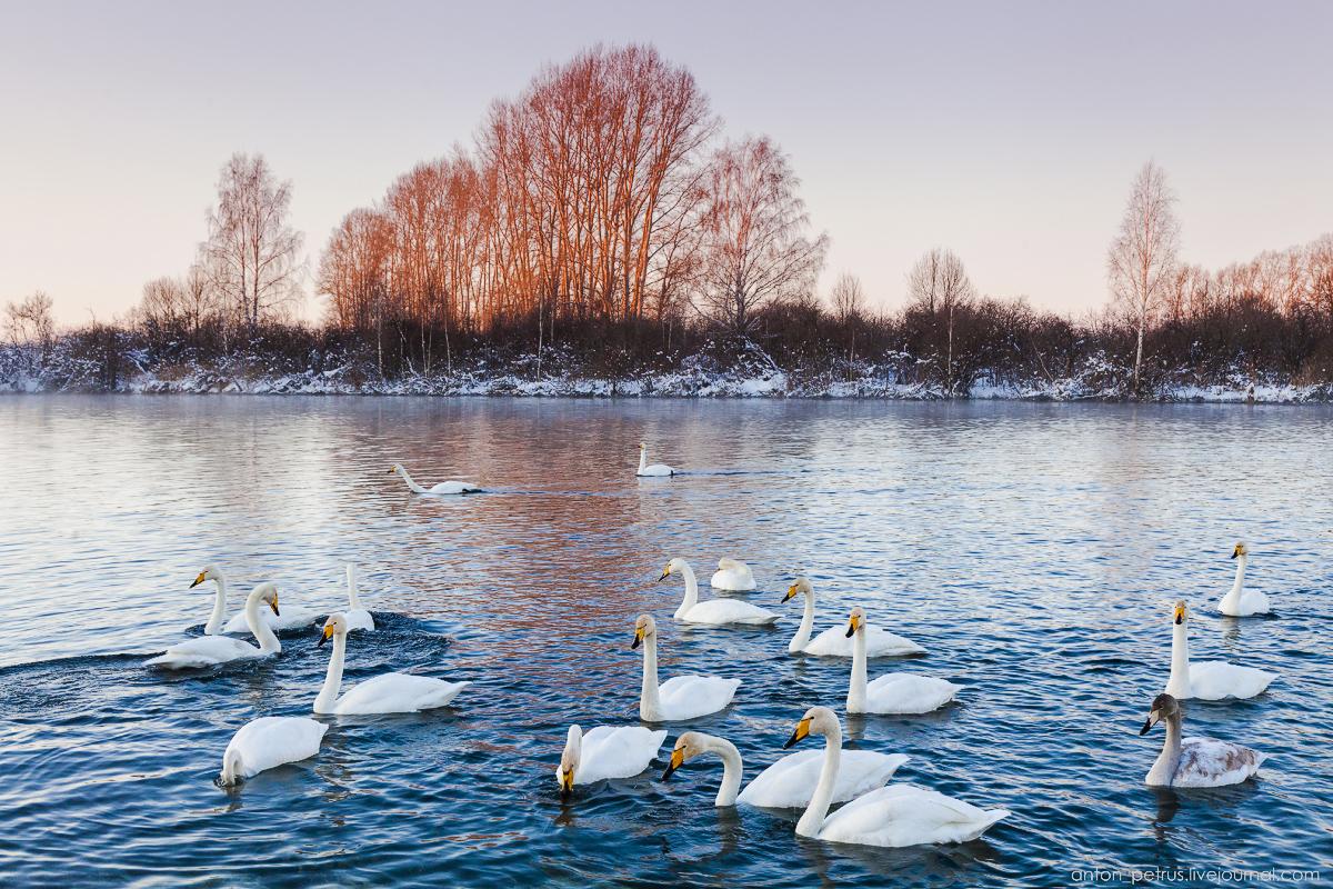 The ballet Swan lake 03