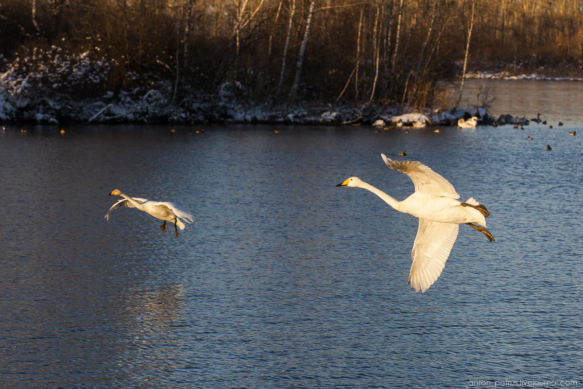 The ballet Swan lake 08