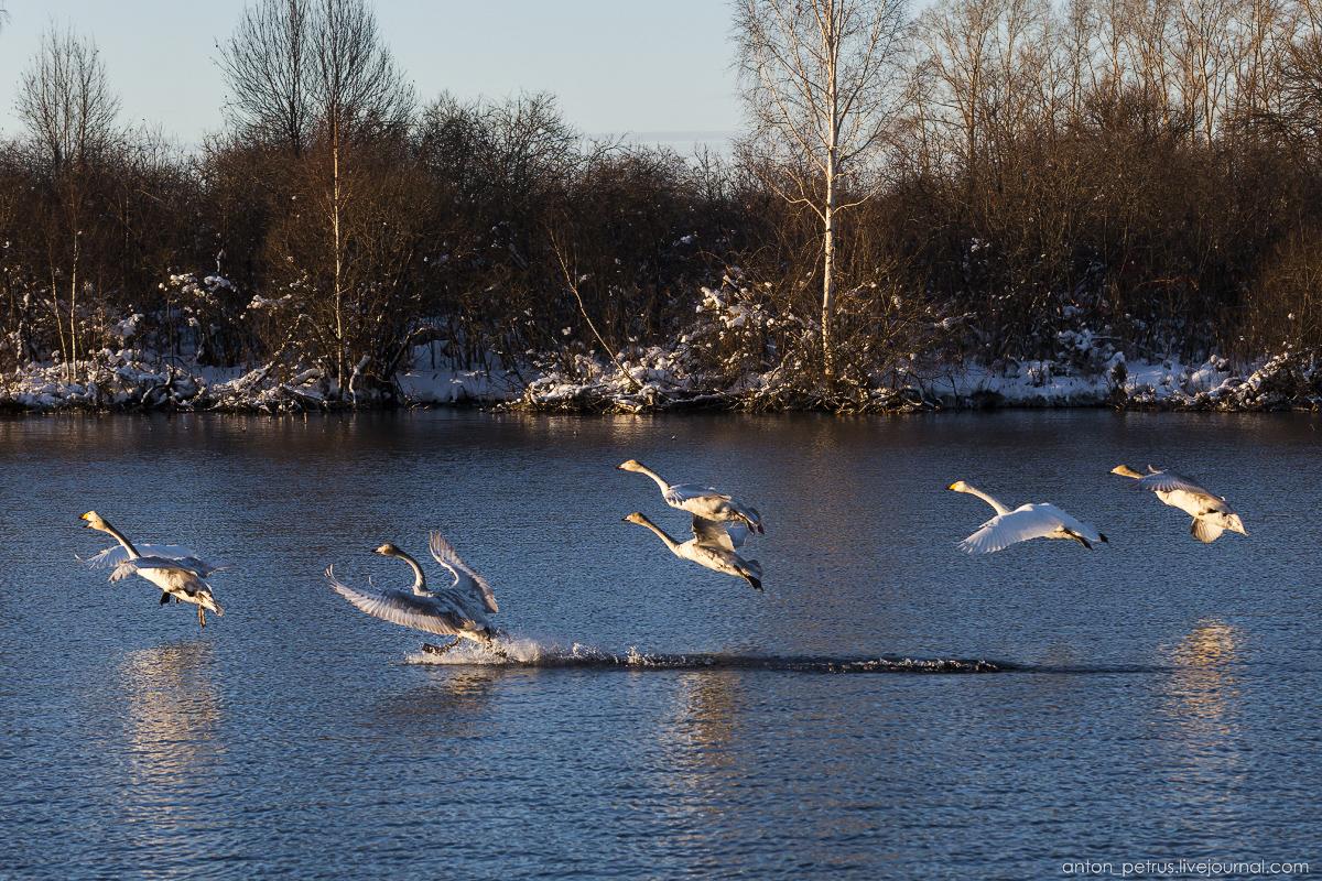 The ballet Swan lake 11
