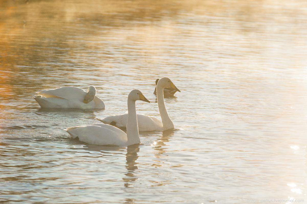 The ballet Swan lake 16
