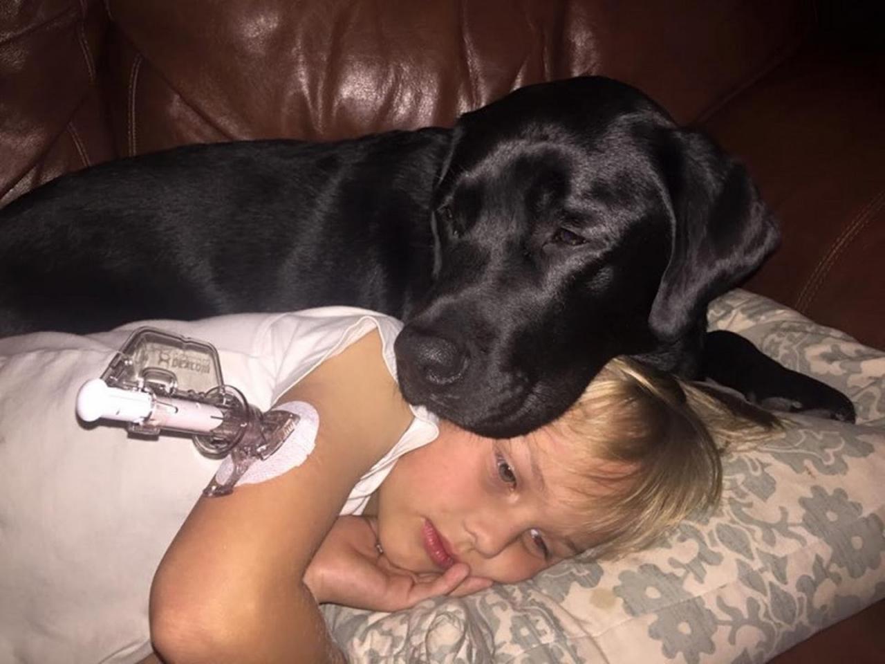 Пес — хранитель по кличке Джедай