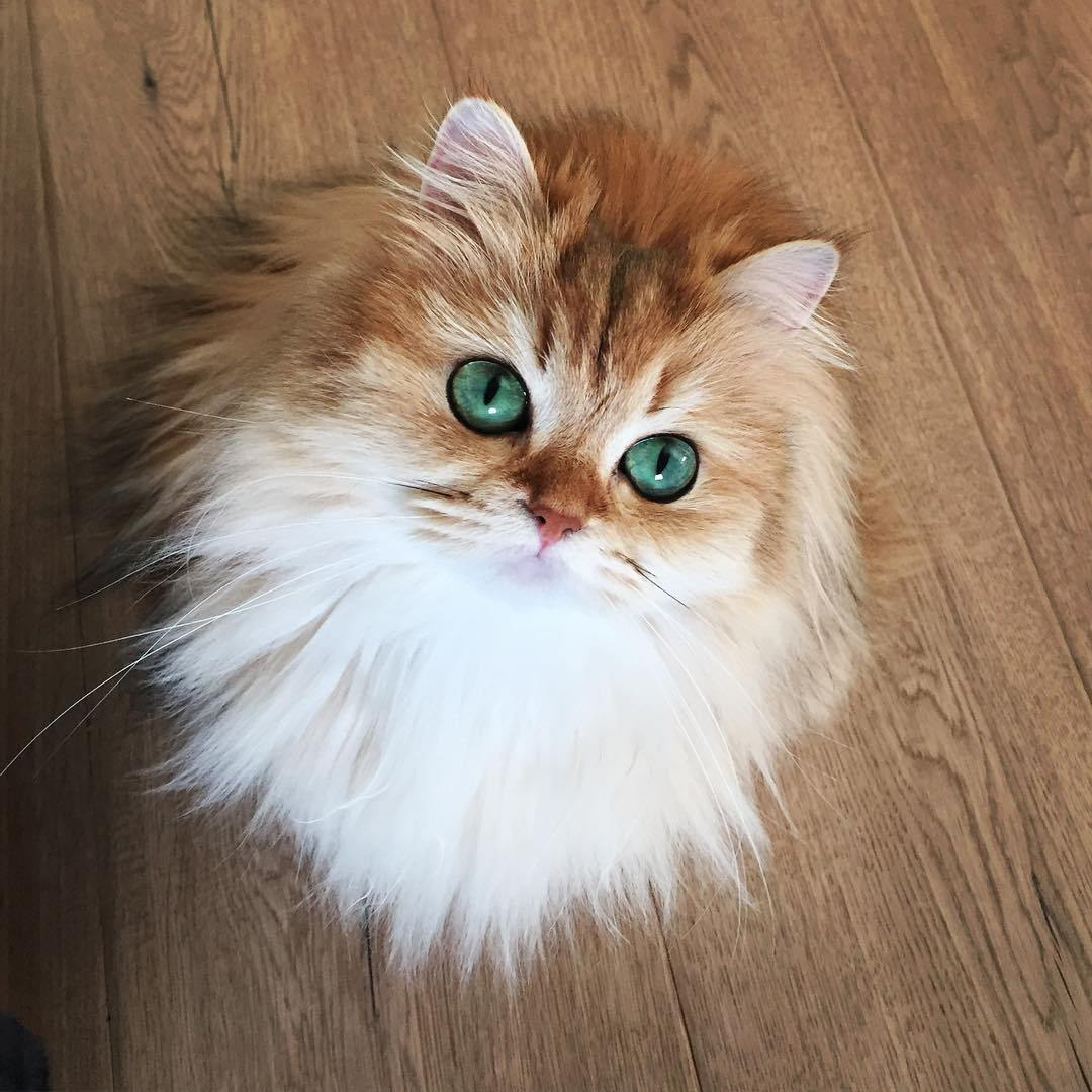 The most adorable cat named Smoothie 01