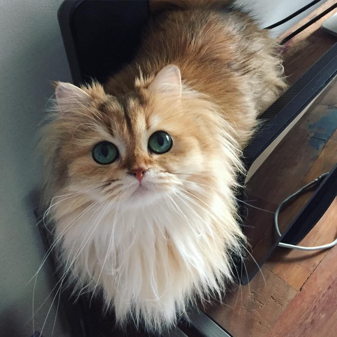 The most adorable cat named Smoothie 04