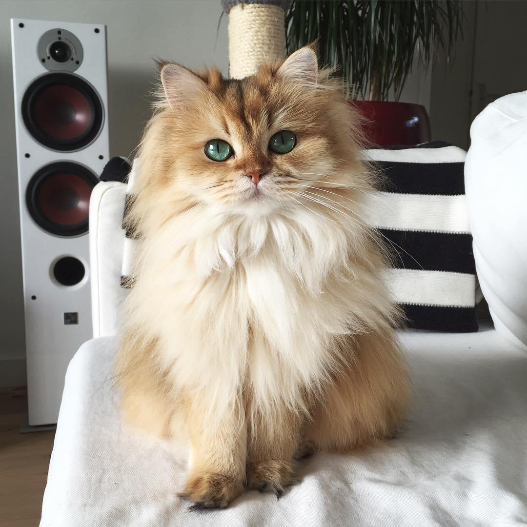 The most adorable cat named Smoothie 10