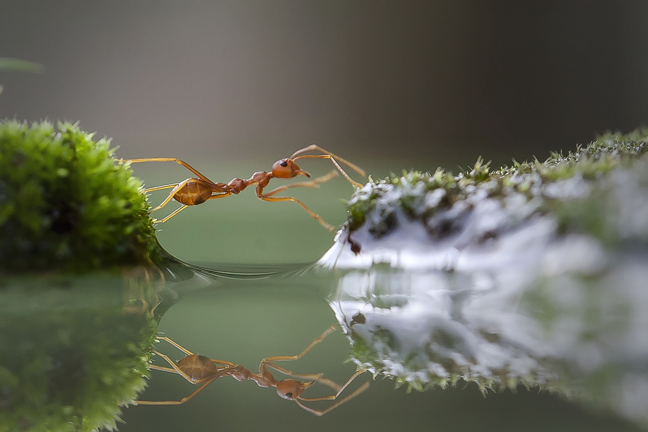 The most popular macro-photography on 500px this year 01