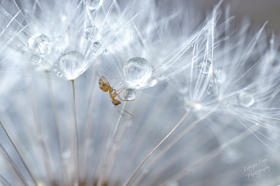 The most popular macro-photography on 500px this year 02