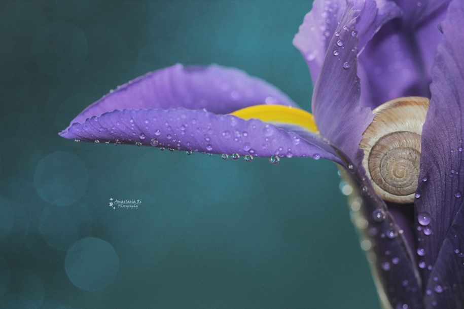 The most popular macro-photography on 500px this year 03