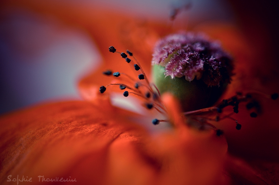 The most popular macro-photography on 500px this year 04