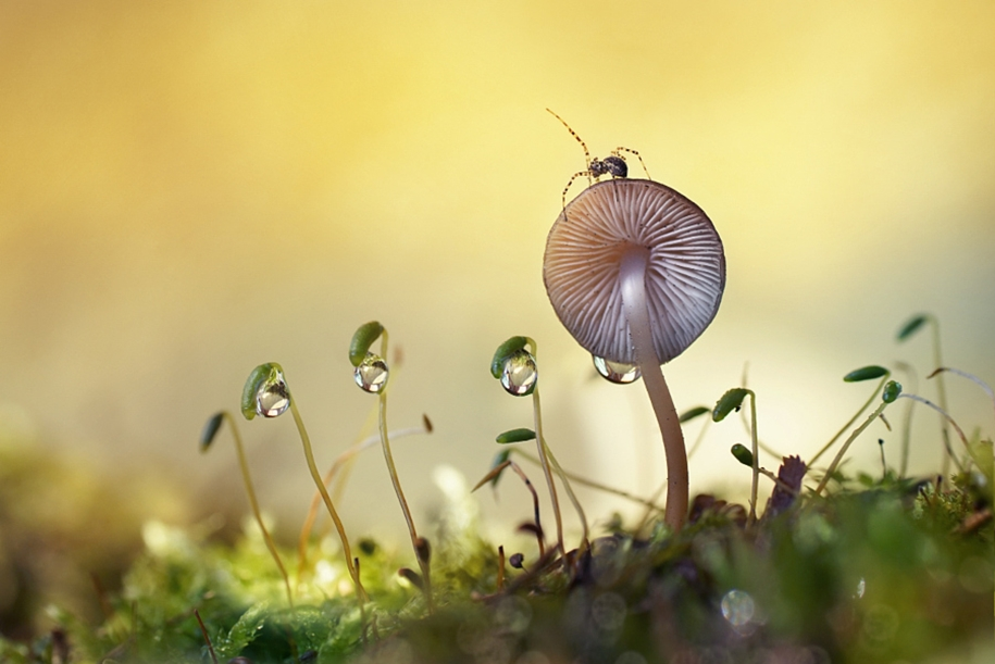 The most popular macro-photography on 500px this year 11