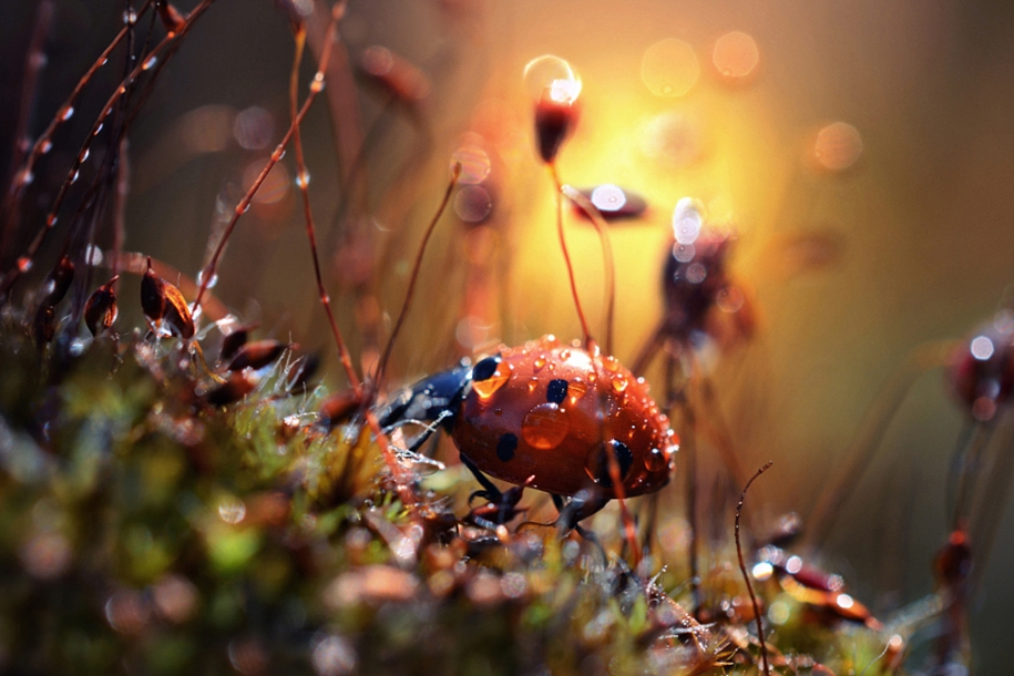 The most popular macro-photography on 500px this year 16