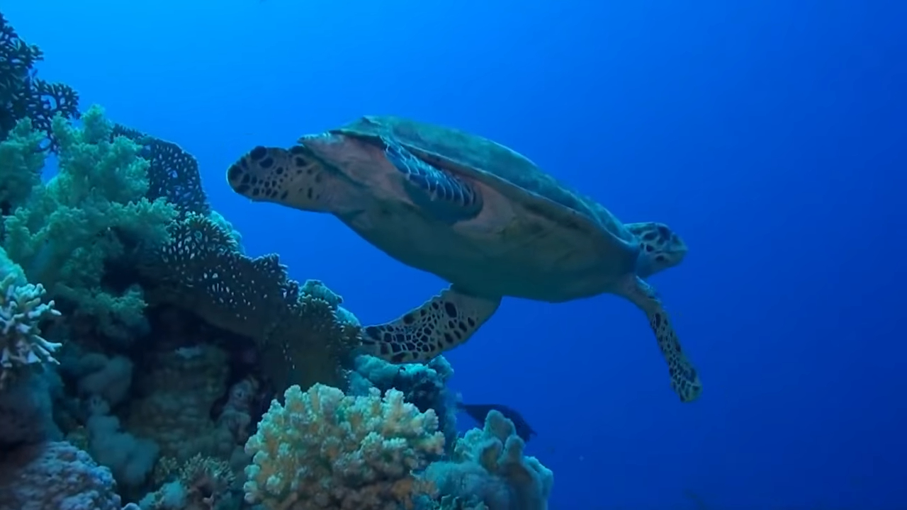 The underwater world of Sharm El-Sheikh