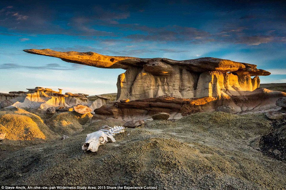 The winners of the contest of photos taken in national parks of the USA 05