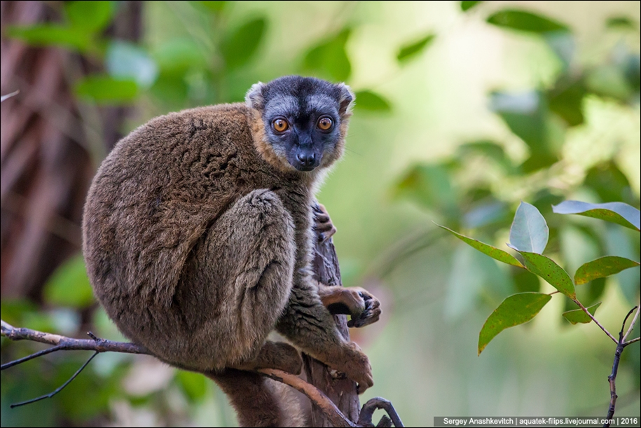 Then, why thousands of tourists go to Madagascar 11