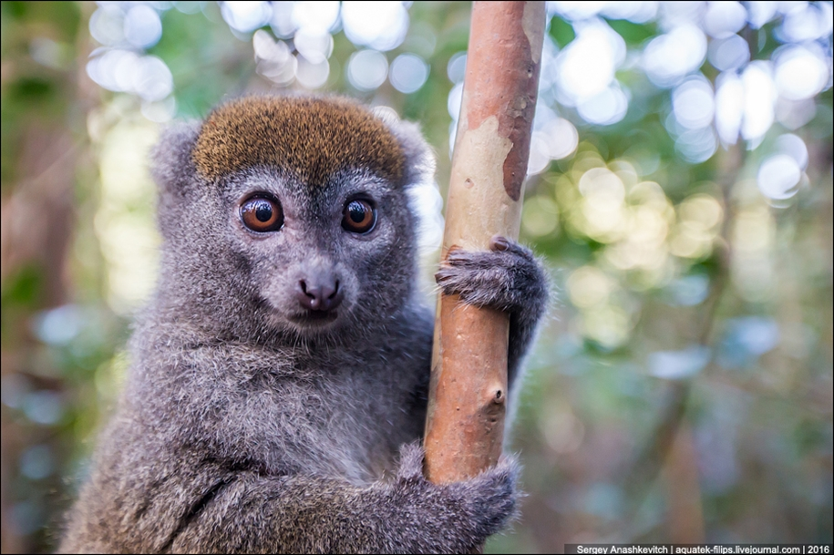 Then, why thousands of tourists go to Madagascar 12
