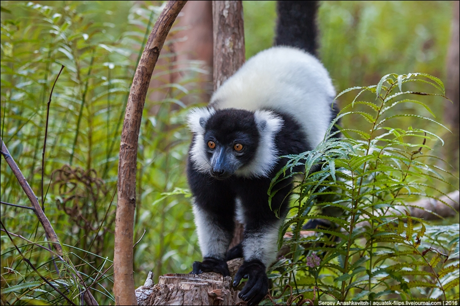 Then, why thousands of tourists go to Madagascar 14