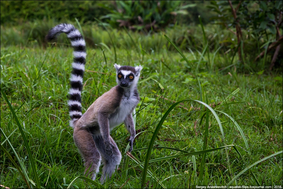 Then, why thousands of tourists go to Madagascar 19