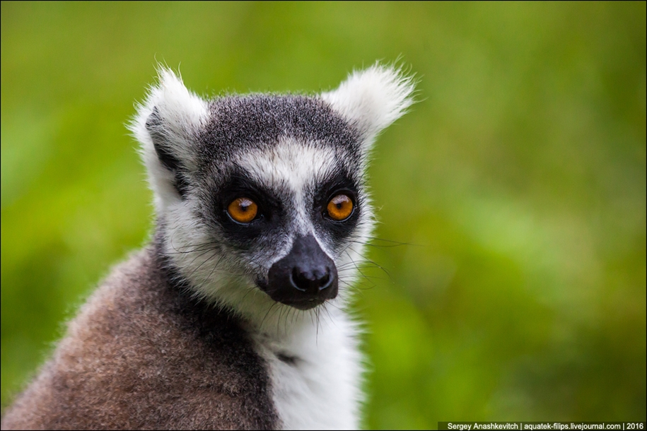 Then, why thousands of tourists go to Madagascar 24