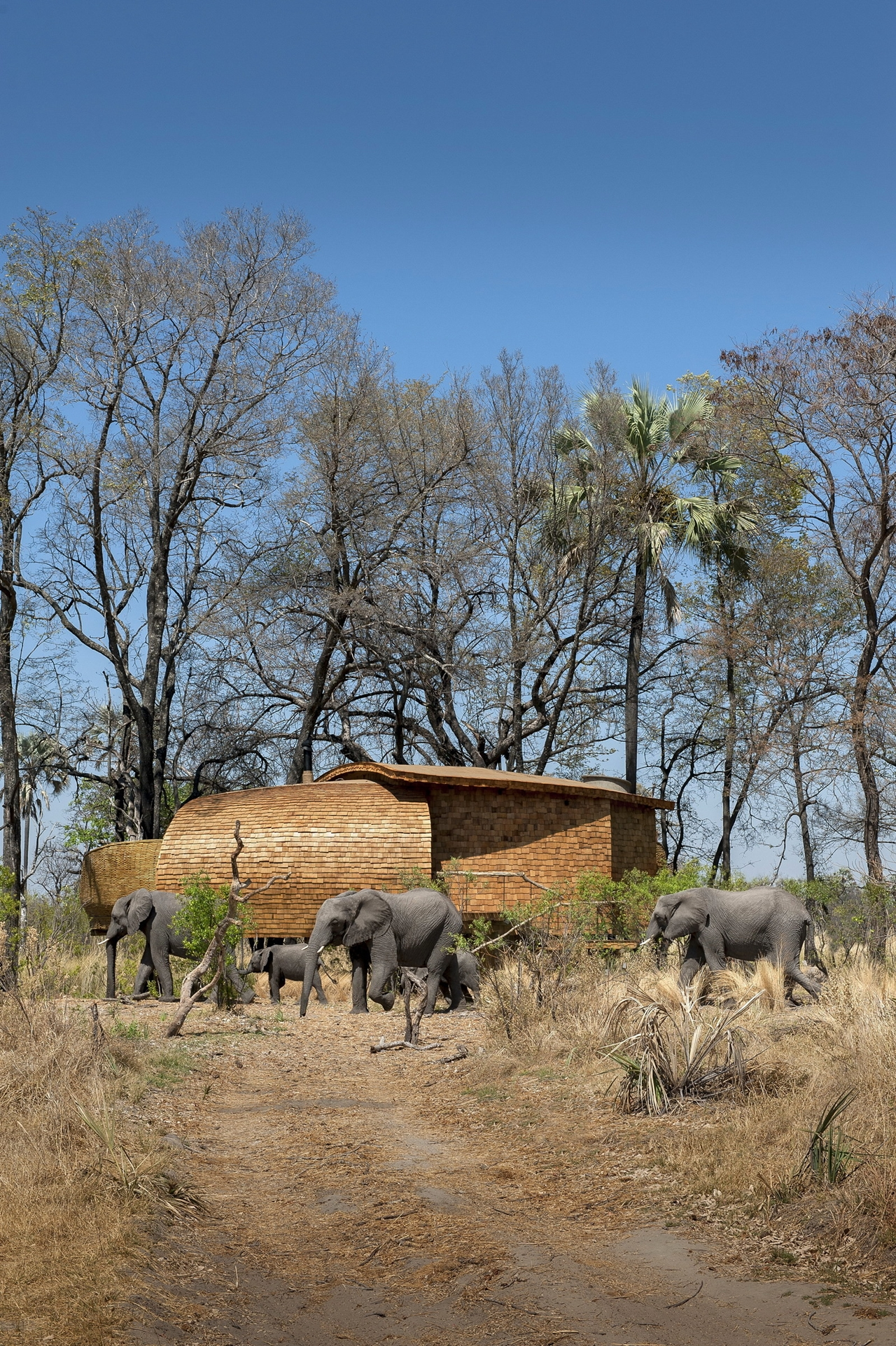 This hotel in Botswana -  unity with nature 21