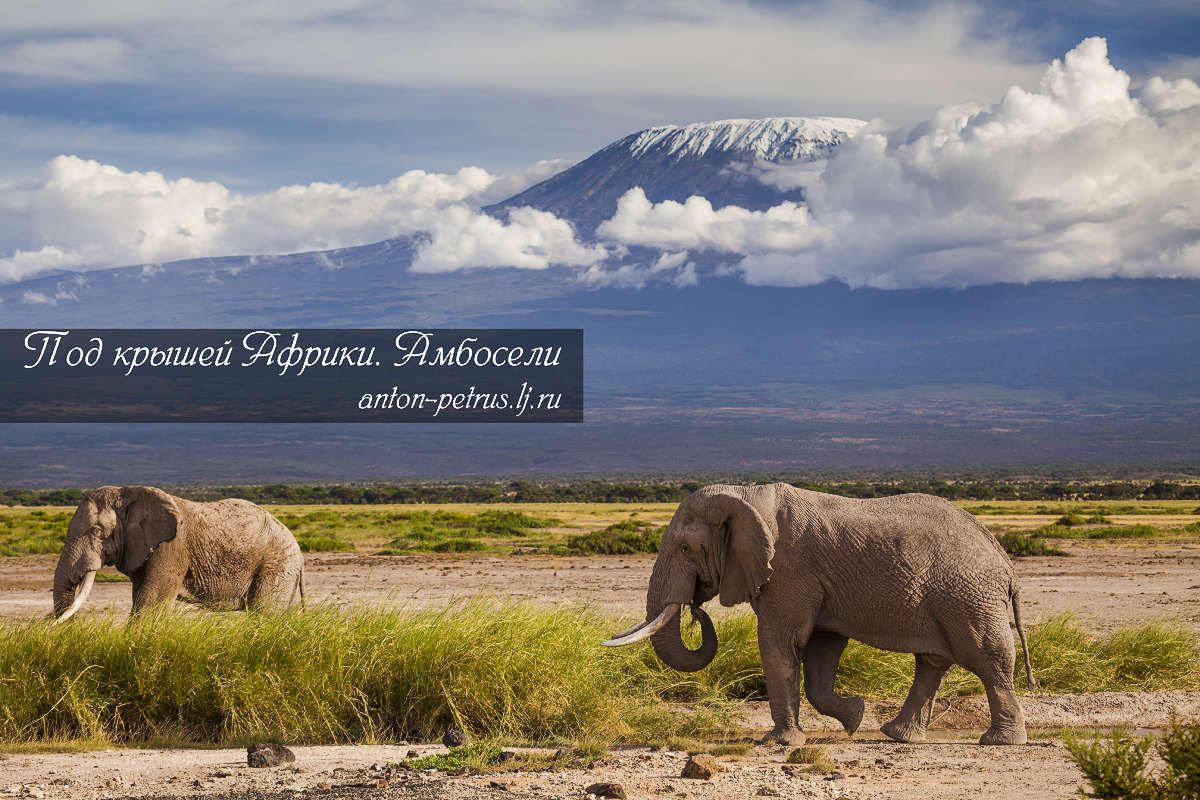 Under the roof of Africa. Amboseli 01