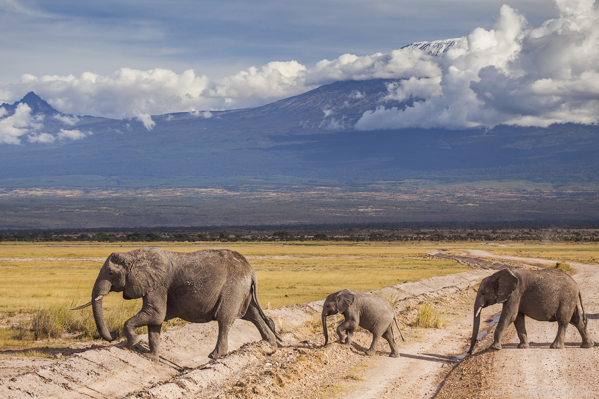 Under the roof of Africa. Amboseli 11