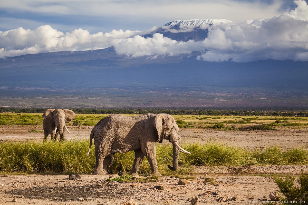 Under the roof of Africa. Amboseli 12