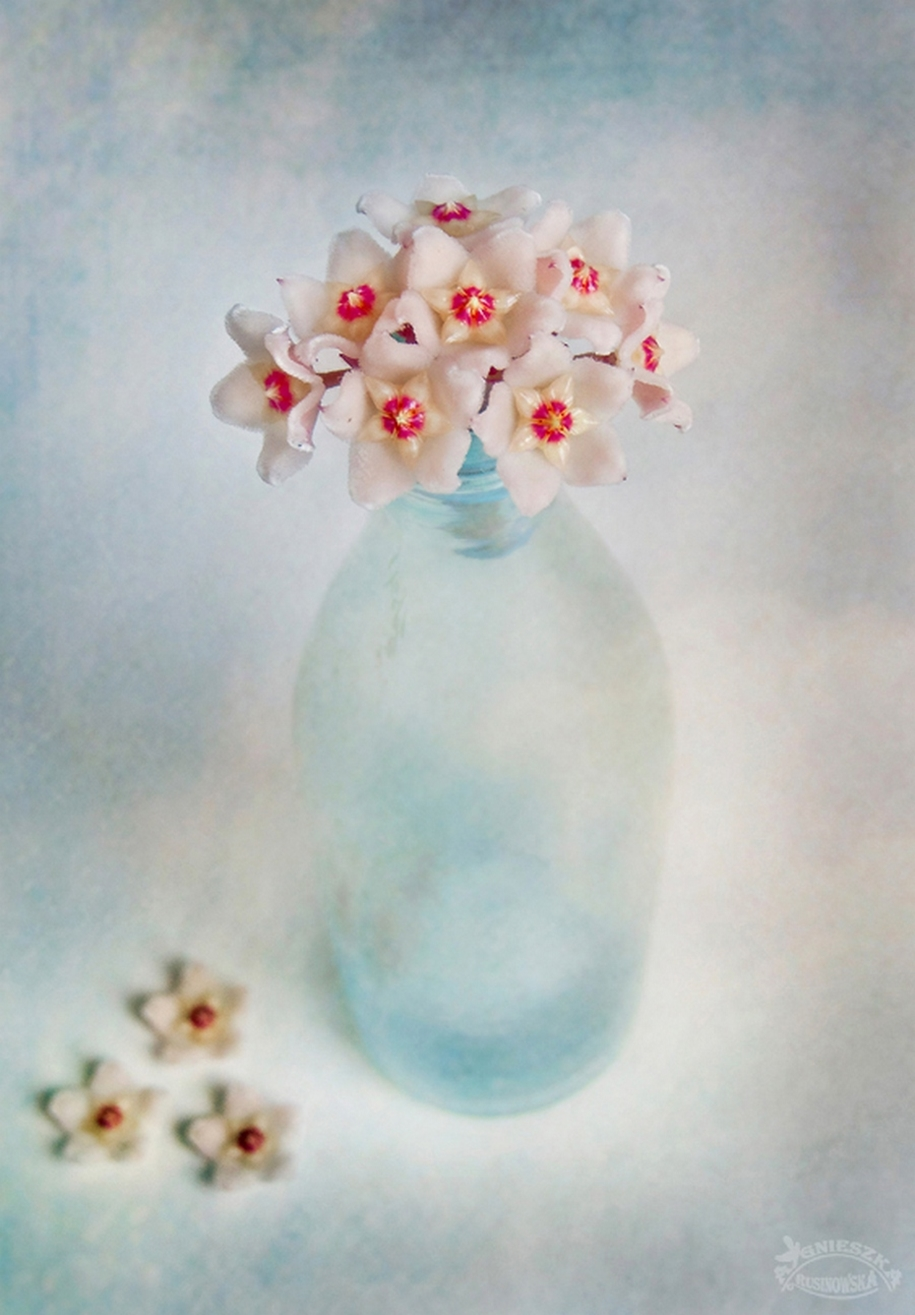 Beautiful still lifes for inspiration 14