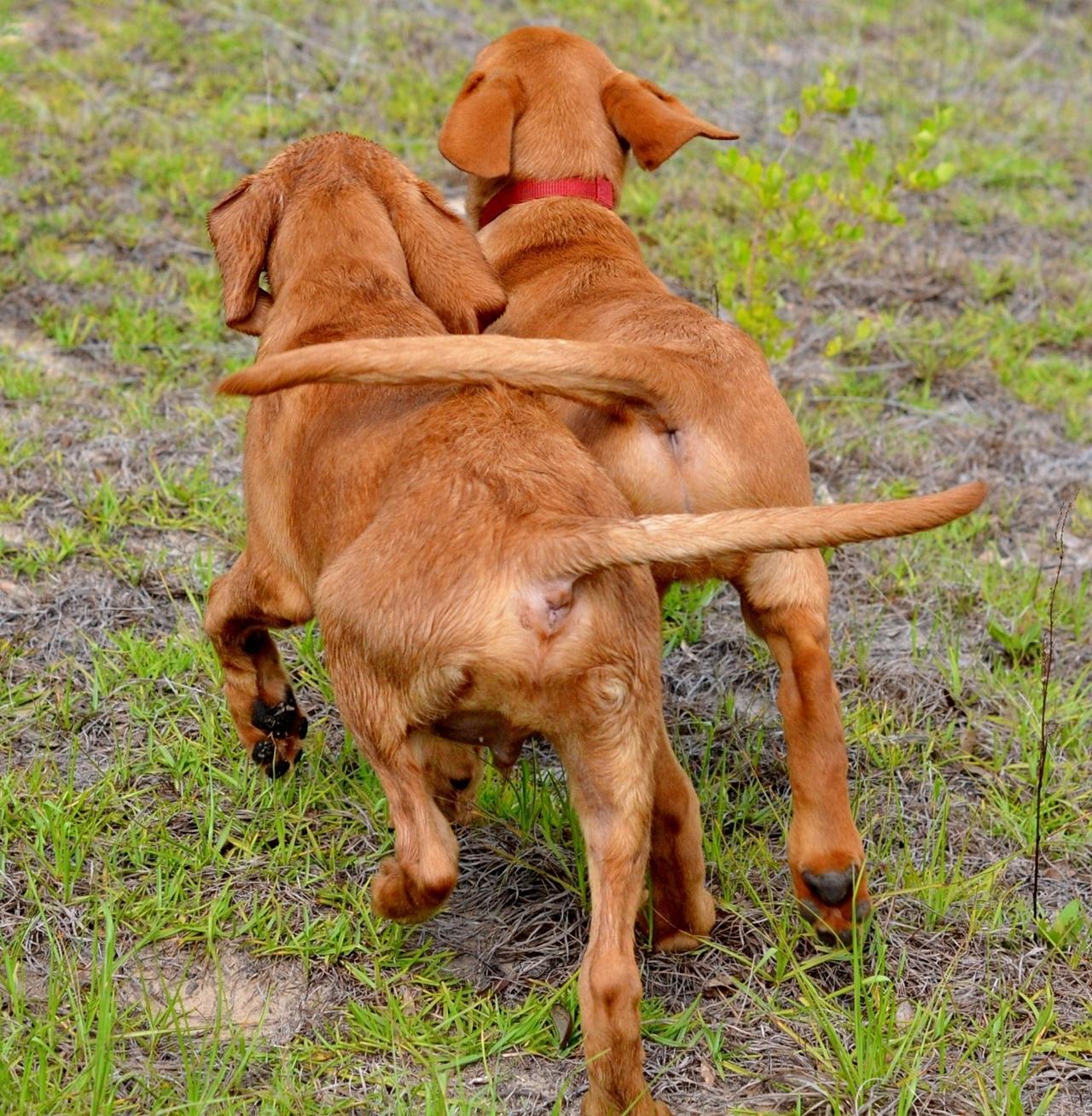 Contest dog photos Kennel Club Dog Photographer 2016_02