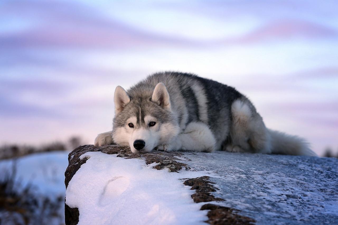 Contest dog photos Kennel Club Dog Photographer 2016_04