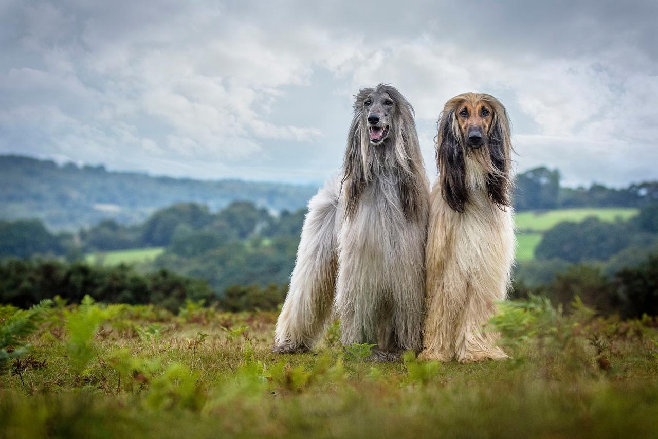 Contest dog photos Kennel Club Dog Photographer 2016_05