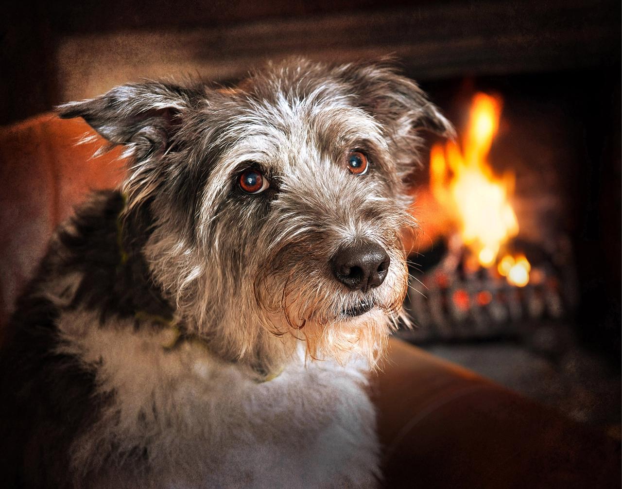Contest dog photos Kennel Club Dog Photographer 2016_06