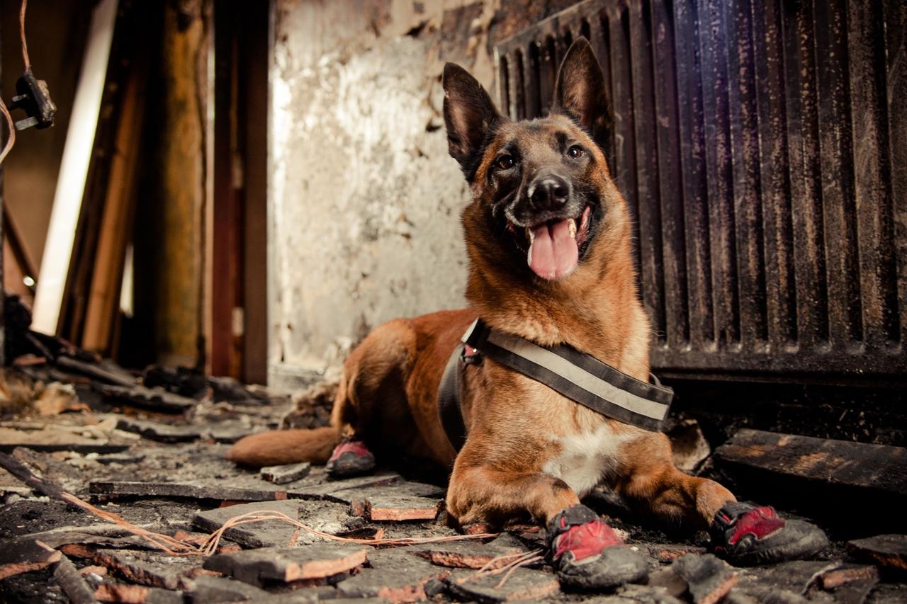 Contest dog photos Kennel Club Dog Photographer 2016_07